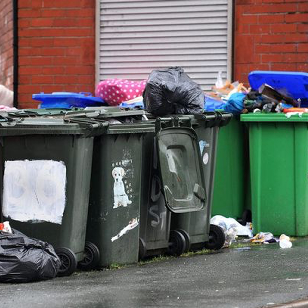 The importance of a professional Wheelie Bin Clean